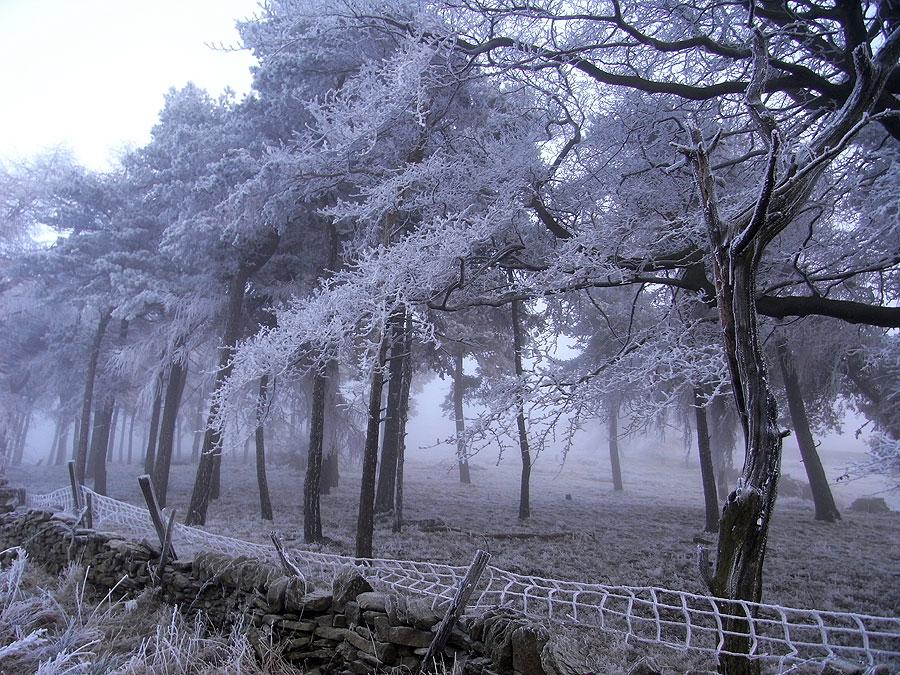 stone_wall_trees